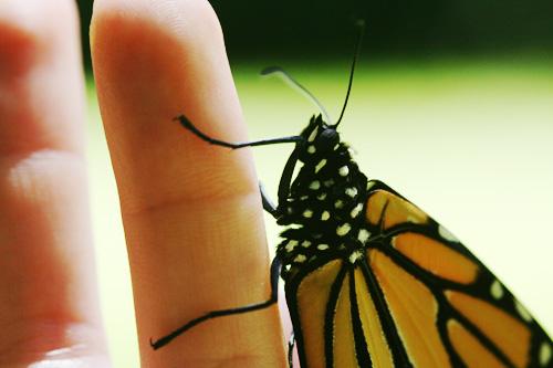 butterfly-on-my-finger.jpg
