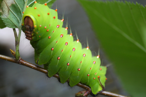 silkworm-1.jpg