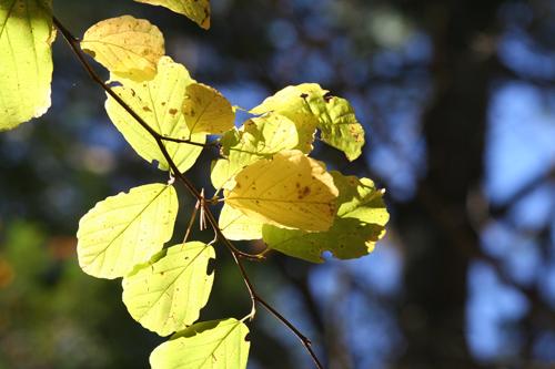 green-leaves-resized.jpg
