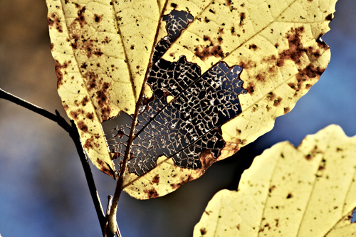 leaf-with-hole-resized.jpg