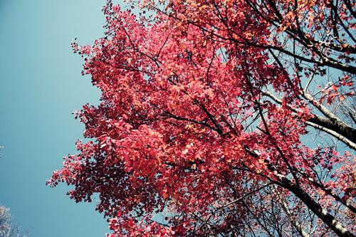 red-leaves-resized.jpg