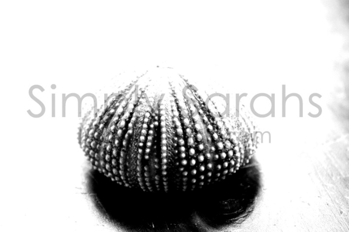 the-urchin-watermarked