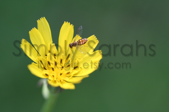 bee-on-flower-watermarked