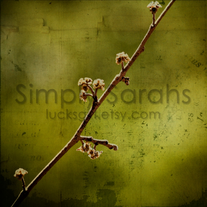 branch-watermarked