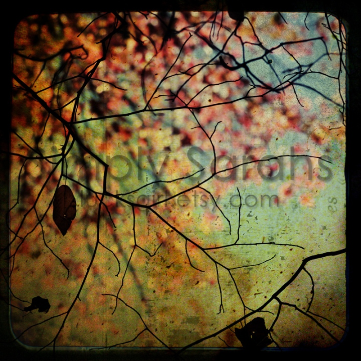branches-watermarked