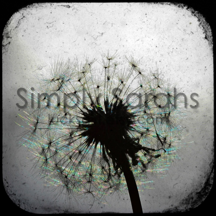 dandelion-watermarked