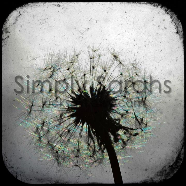 dandelion-watermarked