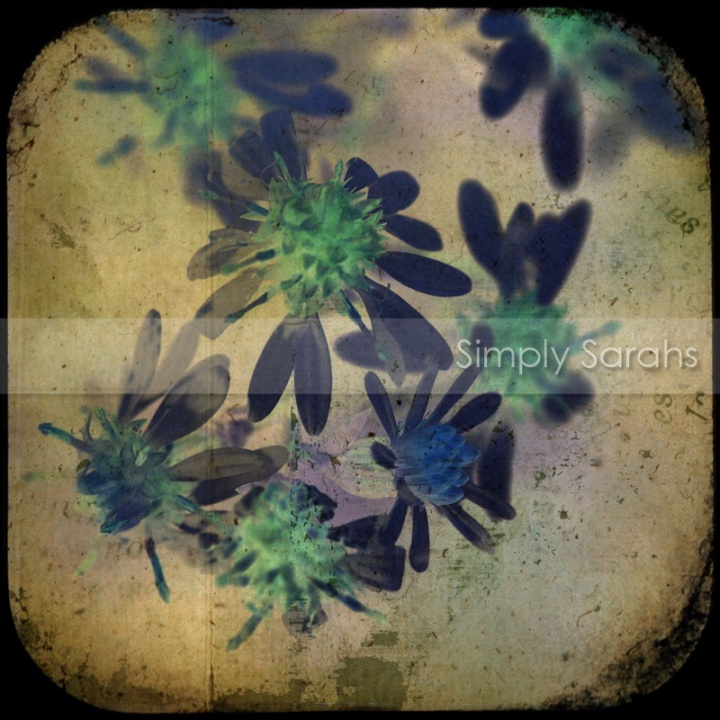 flowers-burst-watermarked