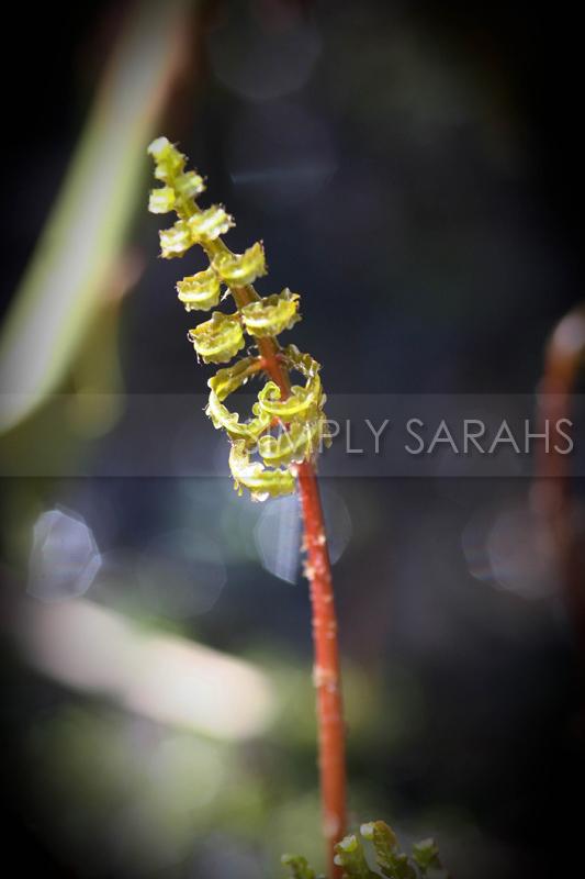 opening-fern