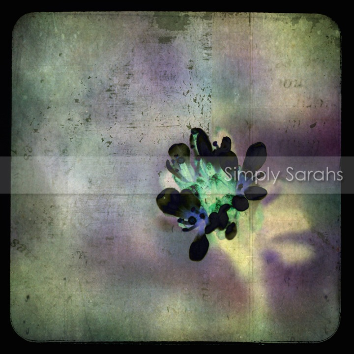 small-flower-burst-watermarked