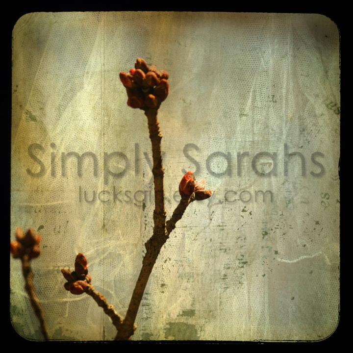 spring-buds-after-2-watermarked