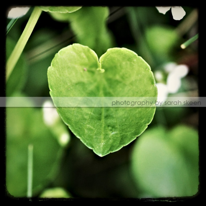 love nature watermarked