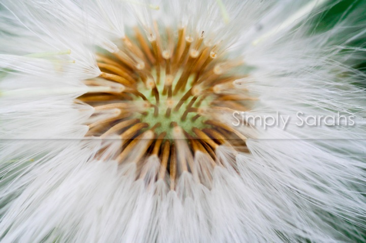 puffy and white watermarked