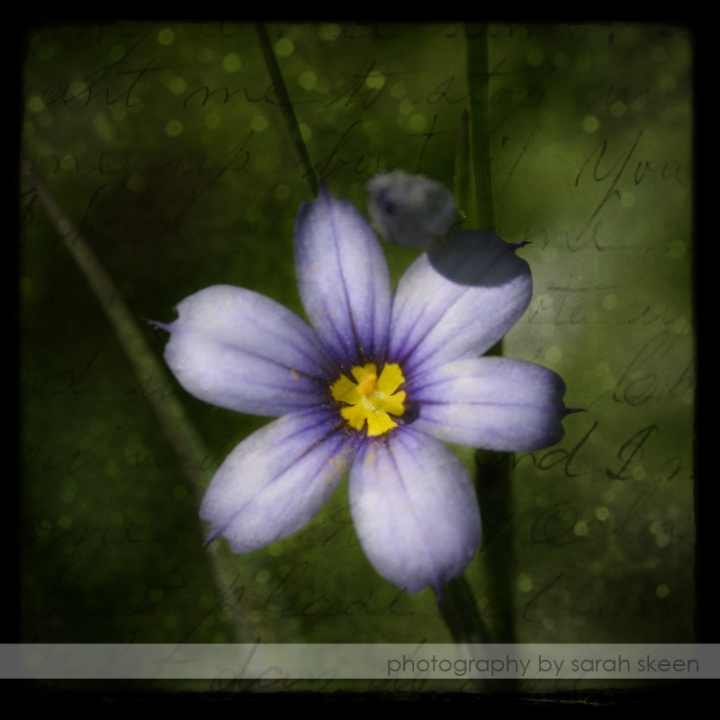 purple flower watermarked