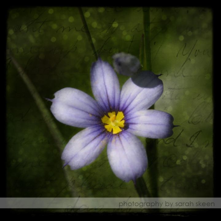 purple flower watermarked